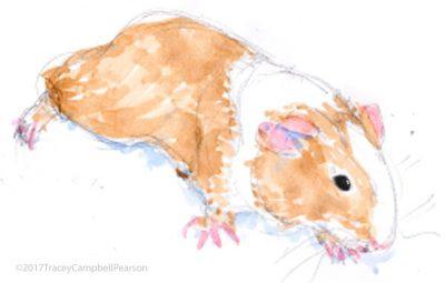 guinea-pig-sketch-1