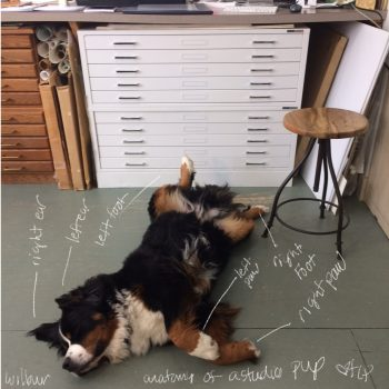 Anatomy of a studio pup-Wilbur