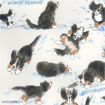 Wilbur sketches-with feather